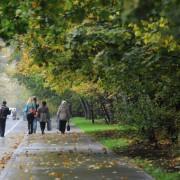 В парке «Сокольники» откроется бесплатный летний кинотеатр
