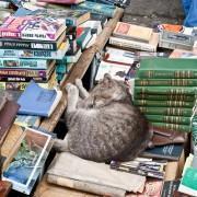 недорогие книжные магазины