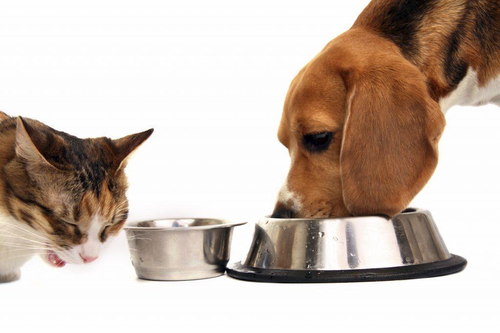 Кошка и собака в одном доме