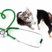 Хороший ветеринар или самолечение: здоровье вашего питомца
