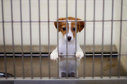 Где в Москве взять щенка из приюта?