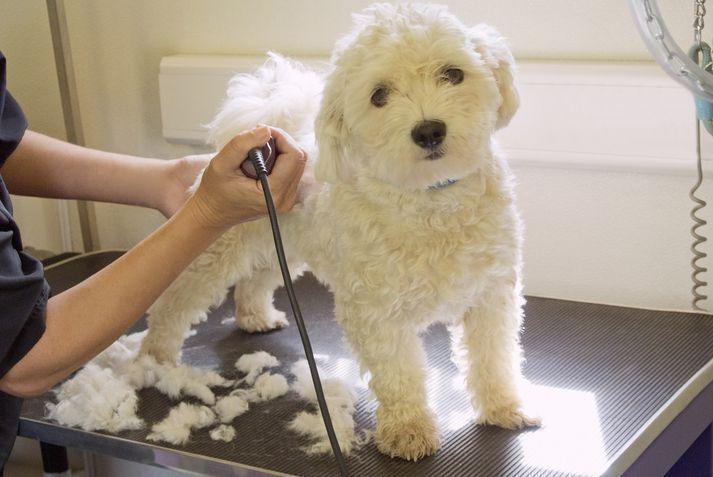 Самые смелые прически для собак